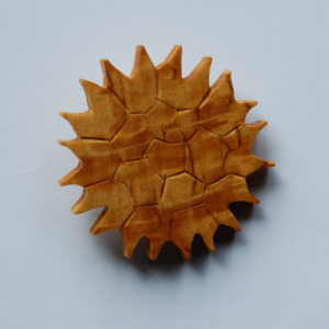 Pediastrum boryanum