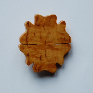 Euastrum verrucosum